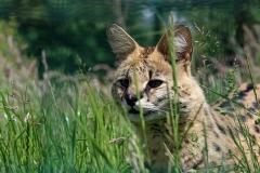 servalcat4