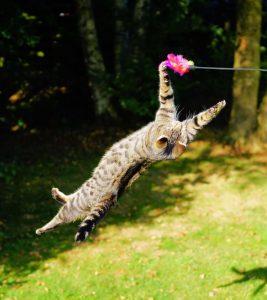 aggressive cat jump